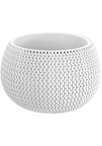 Prosperplast Pflanzkübel »Splofy Bowl«, ØxH: 29x19 cm kaufen