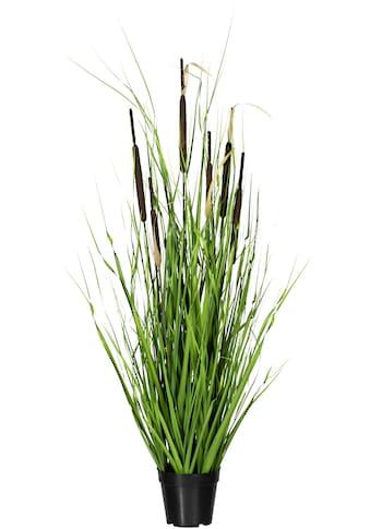 Creativ green Kunstgras »Grasbusch mit Schilfkolben«, in Fibreclayschale kaufen