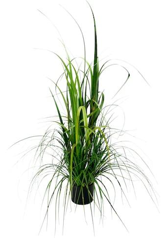 I.GE.A. Kunstpflanze »Gras im Topf« (1 Stück) kaufen