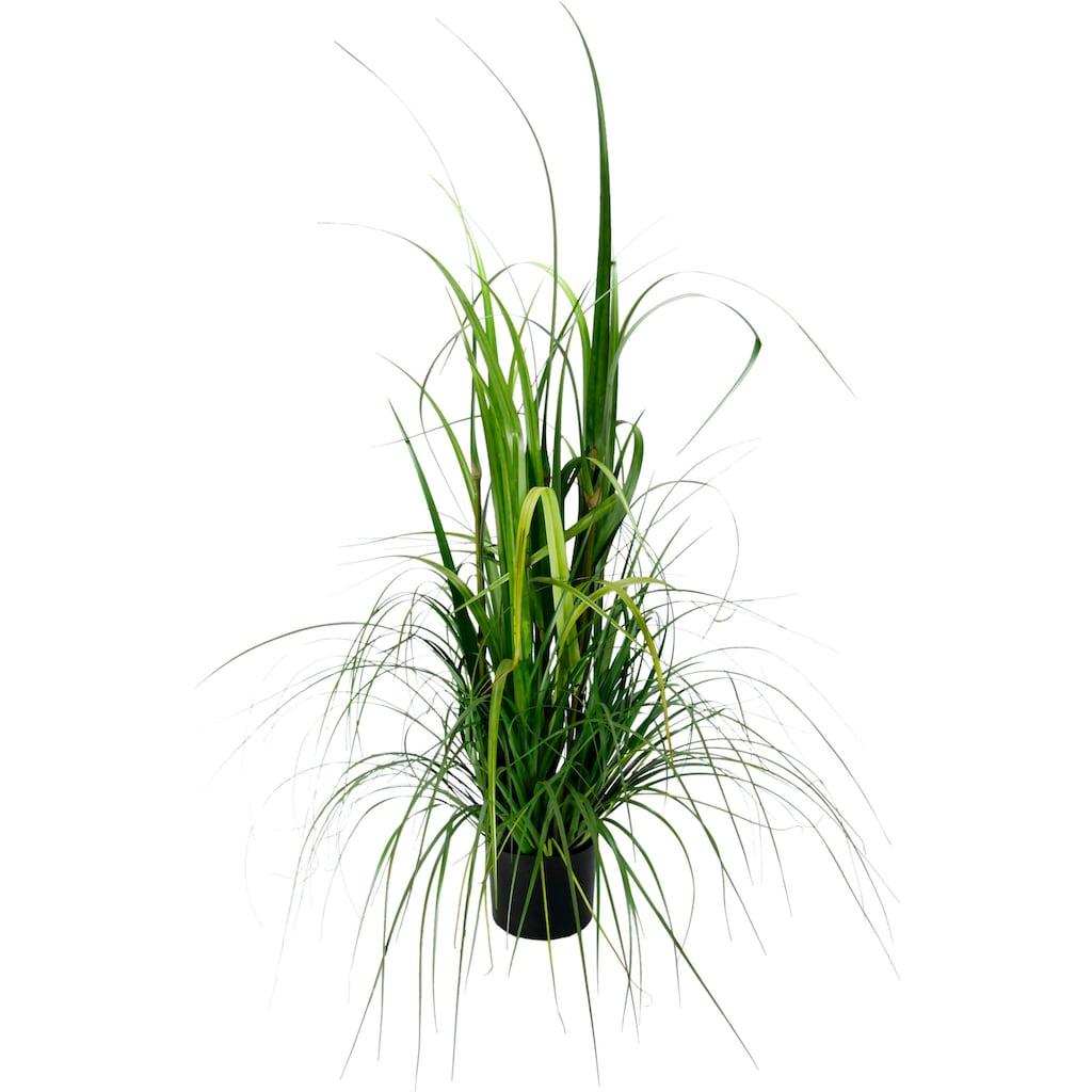 I.GE.A. Kunstpflanze »Gras im Topf«