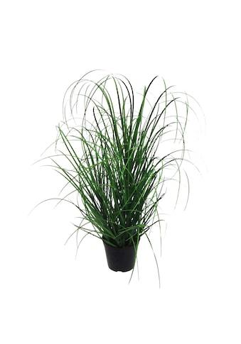 Creativ green Kunstgras »Gras« (1 Stück) kaufen