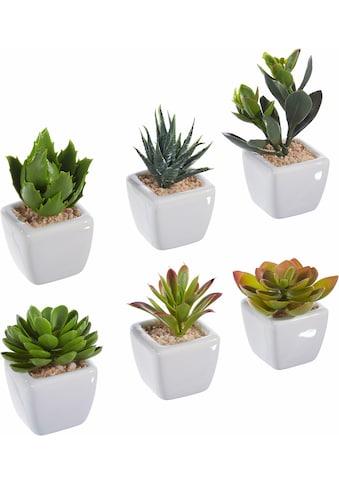 my home Kunstpflanze kaufen