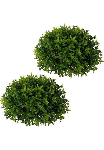Creativ green Kunstpflanze »Buchsbaumhalbkugel« (2 Stück) kaufen