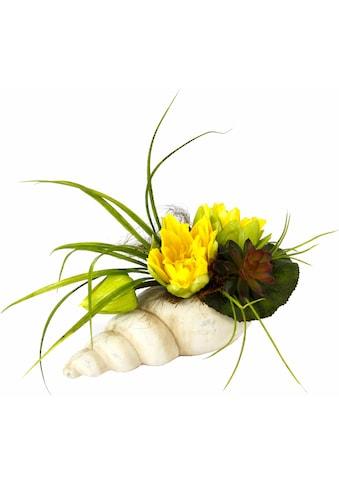 I.GE.A. Kunstpflanze »Gesteck Seerose in Muschel« kaufen