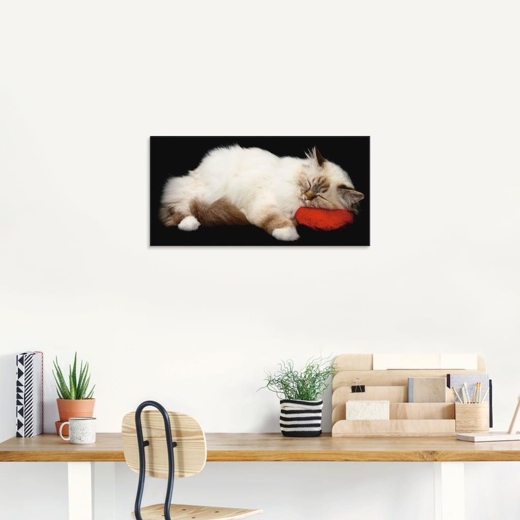Artland Glasbild »Müde Katze«, Haustiere, (1 St.)