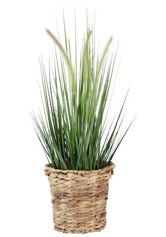 I.GE.A. Kunstpflanze »Gras« (1 Stück) kaufen
