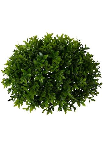Creativ green Kunstpflanze »Buchsbaumhalbkugel« (1 Stück) kaufen