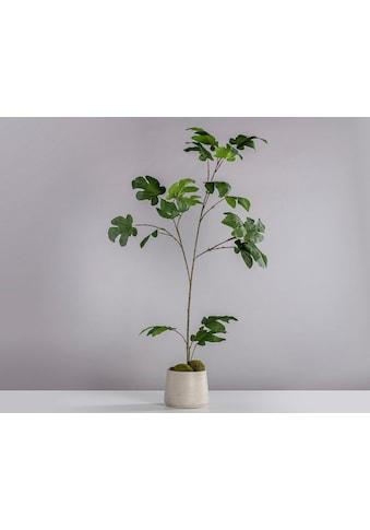 Blütenwerk Künstliche Zimmerpflanze »Feige« kaufen