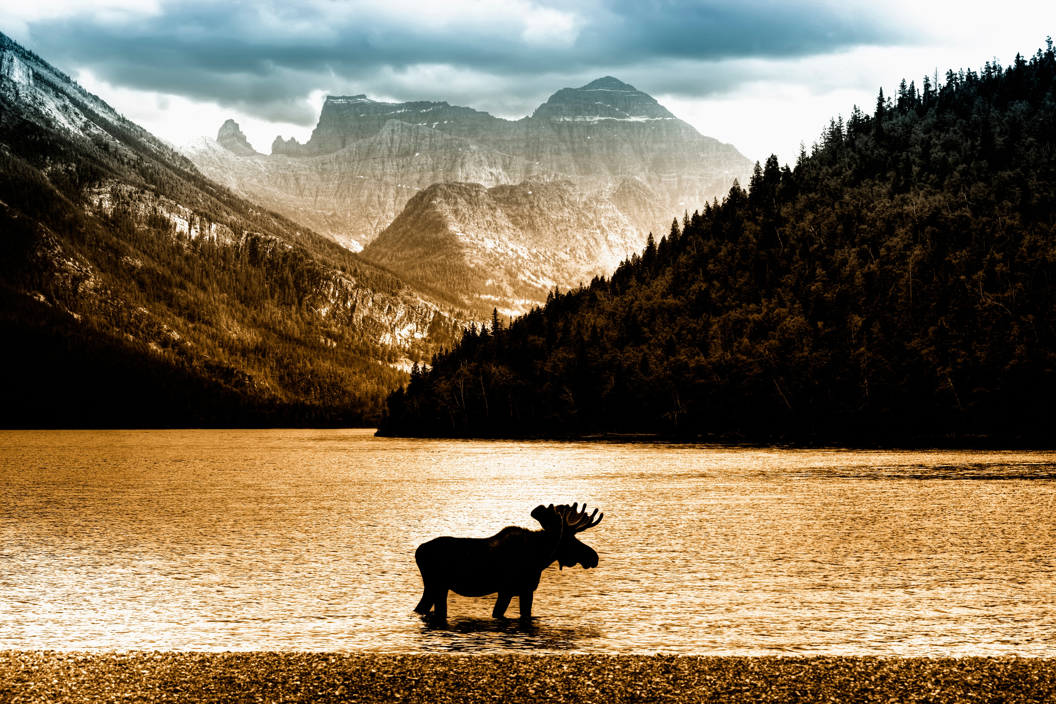 Fototapete »Moose in Waterton Lake« günstig online kaufen