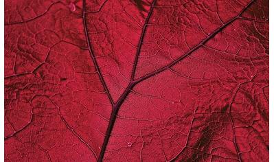 CONSALNET Papiertapete »Nahaufnahme rotes Blatt«, in verschiedenen Größen kaufen