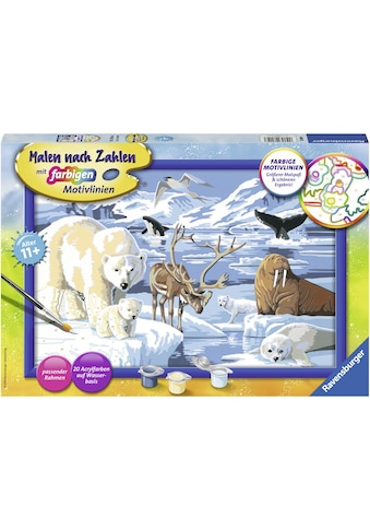 Ravensburger Malen nach Zahlen »Tiere der Arktis«, Made in Europe, FSC® - schützt Wald... kaufen