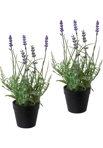 Creativ green Kunstpflanze »Lavendel« (3 Stück) kaufen