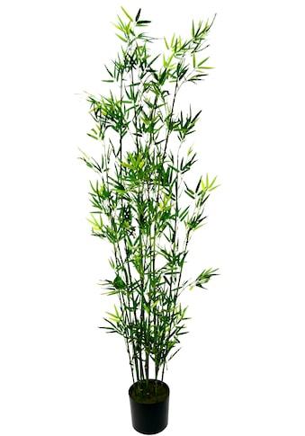I.GE.A. Kunstpflanze »Bambus im Topf« (1 Stück) kaufen