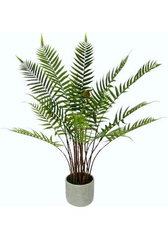 I.GE.A. Kunstpflanze »Waldfarn« (1 Stück) kaufen