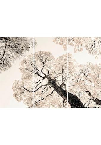 Reinders! Wandbild »Weiße Bäume - Wandbild«, (Set) kaufen