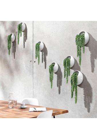 Schneider Kunstpflanze »Ranken« kaufen