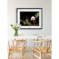 Komar Poster »Giant Panda«, Tiere, Höhe: 40cm