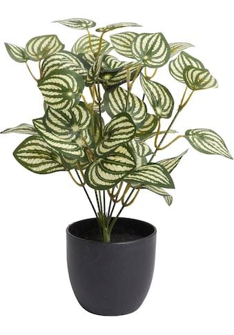 Botanic-Haus Künstliche Zimmerpflanze »Zebrina« kaufen