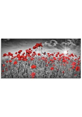 Artland Glasbild »Idyllisches Mohnblumenfeld mit Sonne«, Blumen, (1 St.) kaufen
