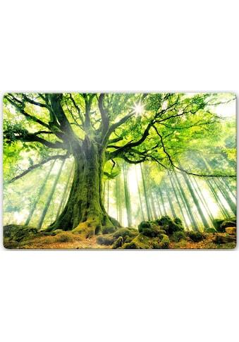 Glasbild »Kiciak  -  Märchenwald« kaufen