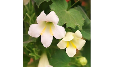 Balkonpflanzen Auf Rechnung Kaufen Quelle De