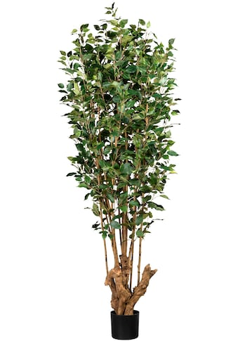 Creativ green Kunstbaum »Ficus Benjamini« (1 Stück) kaufen
