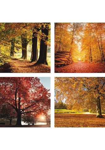 Home affaire Leinwandbild »Herbstlandschaft«, (Set), 4x 30/30 cm, auf Platte kaufen
