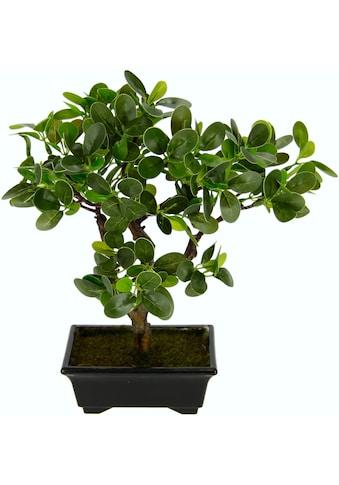 I.GE.A. Kunstbonsai »Ginseng - Bonsai« (1 Stück) kaufen