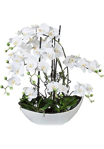Creativ green Kunstorchidee »Phalaenopsisarrangement, 68cm weiss«, in Keramikschale kaufen