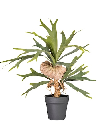 Creativ green Kunstpflanze »Platycerium« kaufen