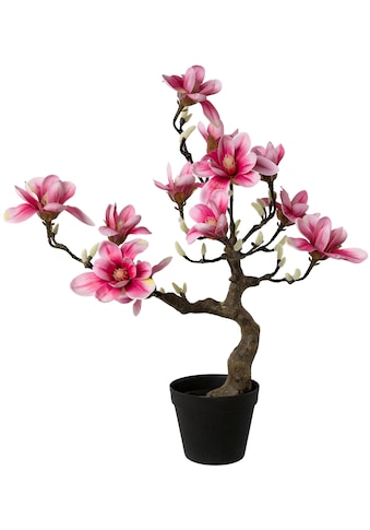 Creativ green Kunstpflanze »Magnolienbaum« (1 Stück) kaufen