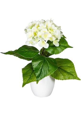 my home Künstliche Zimmerpflanze »Leana« kaufen