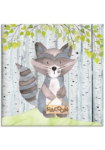 Artland Glasbild »Waldfreunde- der zauberhafte Waschbär«, Tiere, (1 St.) kaufen