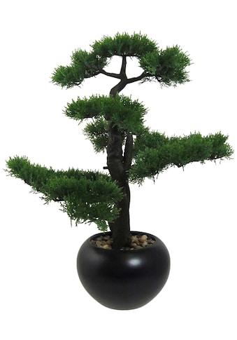 Creativ green Kunstpflanze »Bonsai Zeder« (1 Stück) kaufen