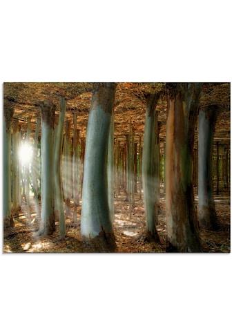 Artland Glasbild »Zauberwald«, Wald, (1 St.) kaufen