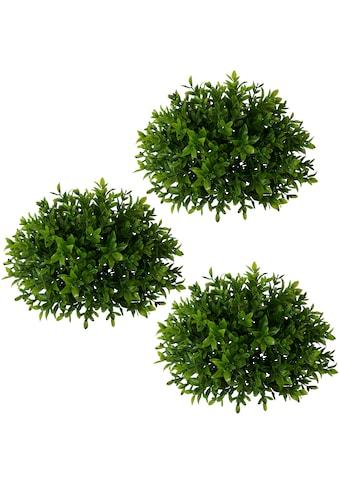 Creativ green Kunstpflanze »Buchsbaumhalbkugel« (3 Stück) kaufen