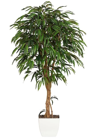 Creativ green Kunstpflanze »Weeping - Ficus« (2 Stück) kaufen
