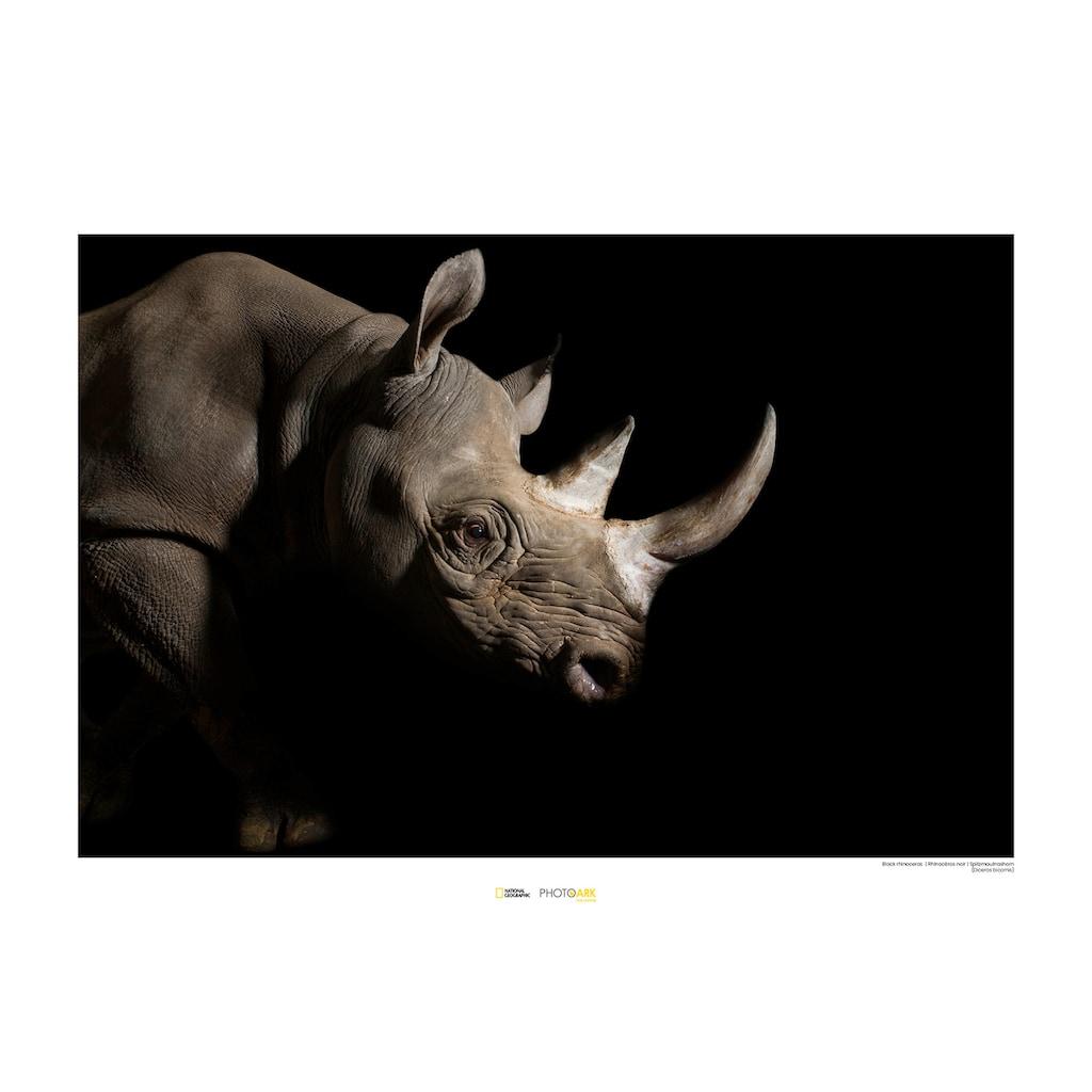KOMAR Wanddekoration »Black Rhinoceros«