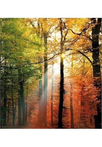 Wall-Art Vliestapete »Goldener Herbst« kaufen