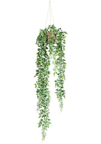 Creativ green Kunstranke »Ruscus-Hängeampel« kaufen