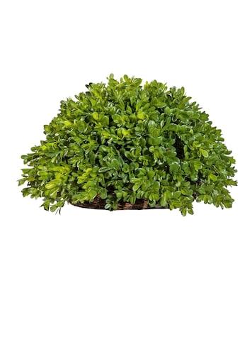 Creativ green Kunstpflanze »Buchsbaum Halbkugel« (1 Stück) kaufen