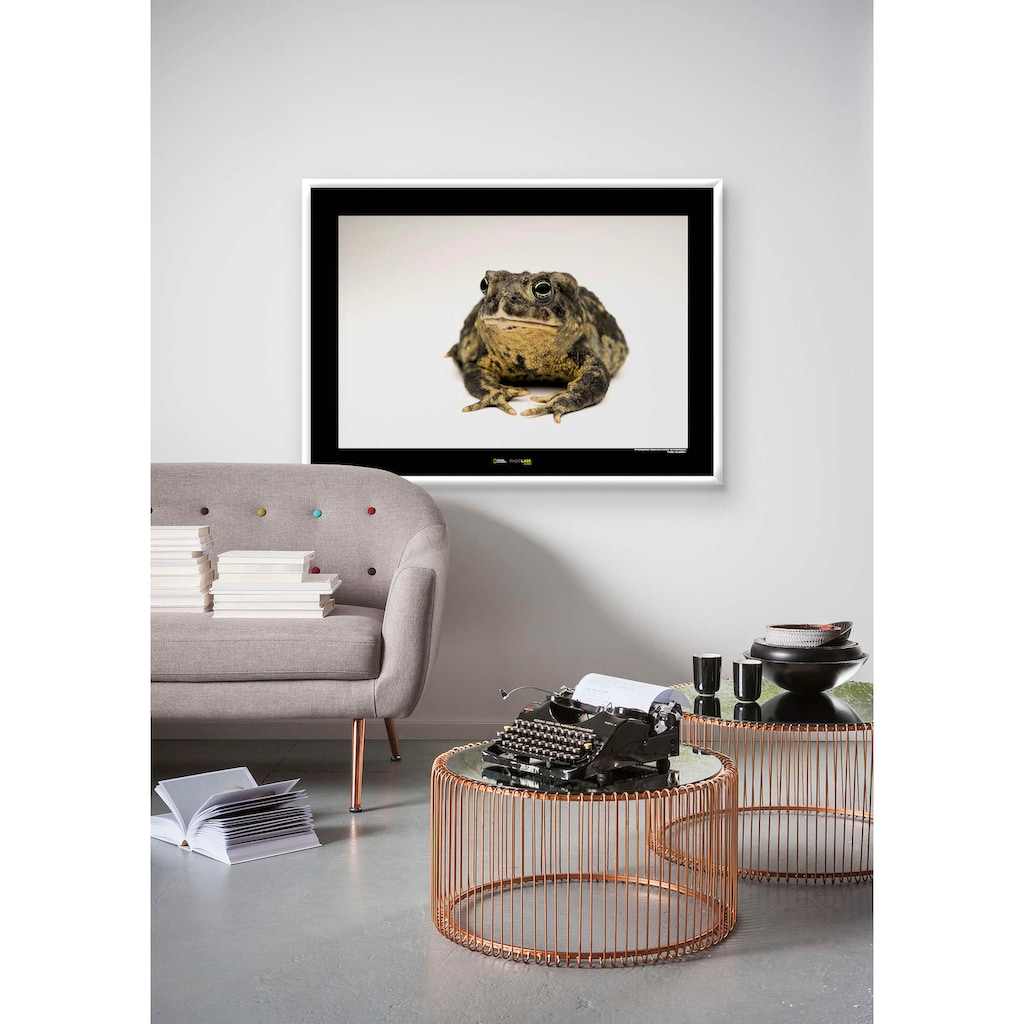 Komar Poster »Wyoming Toad«, Tiere, Höhe: 50cm