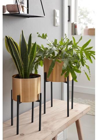 COUCH♥ Pflanzkübel (Set, 2 Stück) kaufen