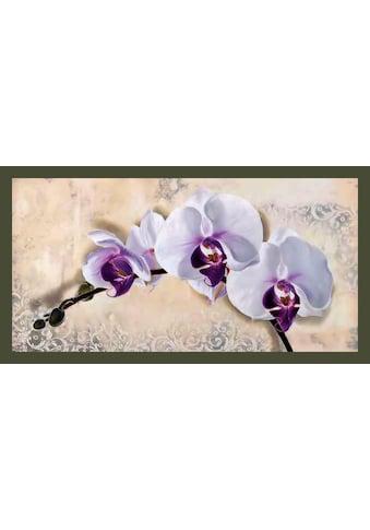 Home affaire Bild mit Rahmen »ELENA DOLCI / Royal Orchid«, (1 St.) kaufen