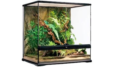 Exo Terra Terrarium, BxTxH: 65x51x66 cm kaufen