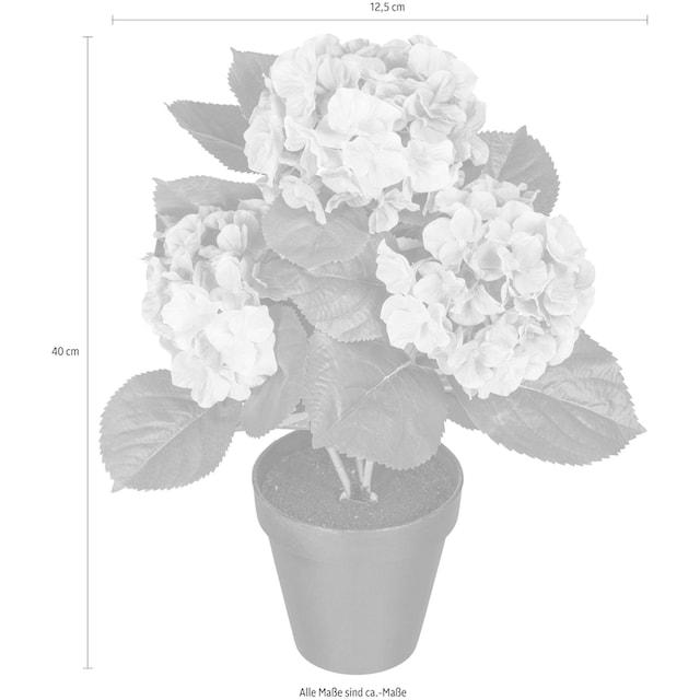 Creativ green Kunstpflanze »Hortensienbusch«