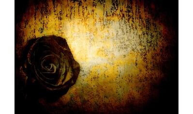 CONSALNET Vliestapete »Schwarze Rose«, in verschiedenen Größen kaufen