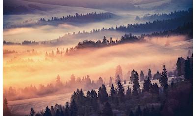 CONSALNET Vliestapete »Waldlandschaft im Nebel«, in verschiedenen Größen kaufen