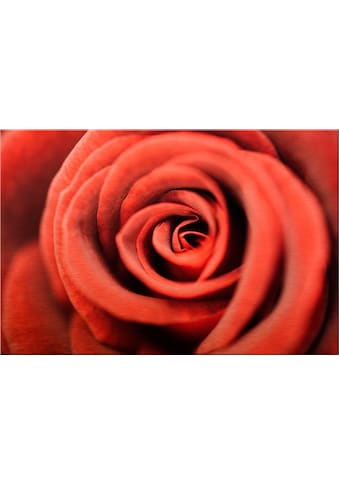 Premium collection by Home affaire Alu - Dibond - Druck »Rote Rose« kaufen