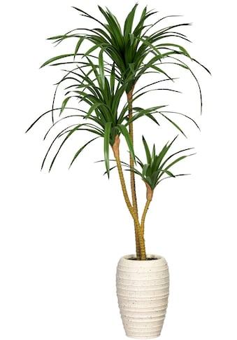 Creativ green Künstliche Zimmerpflanze »Dracaena marginata«, in Keramikvase kaufen